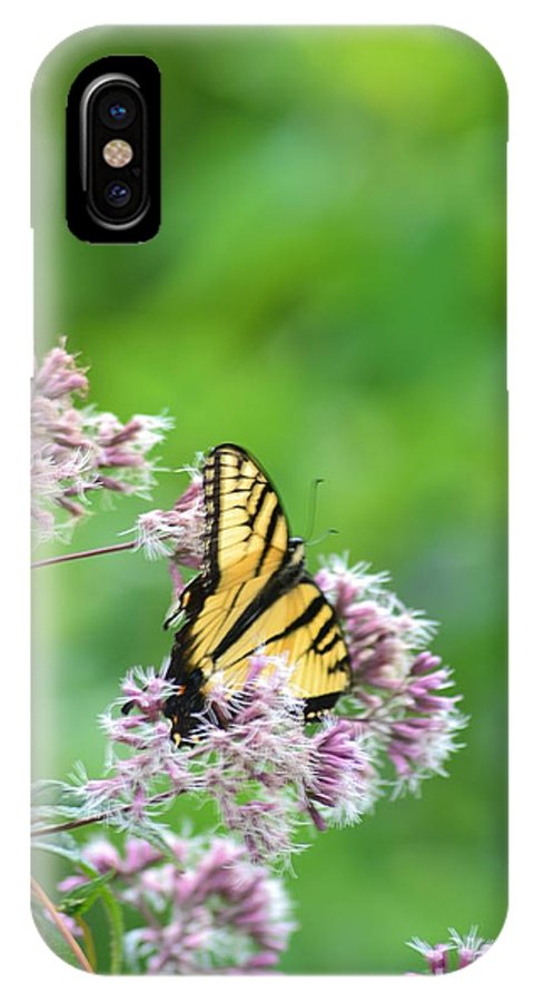 Butterfly IPhone X Case featuring the photograph Blue Ridge Butterfly by Paula Card