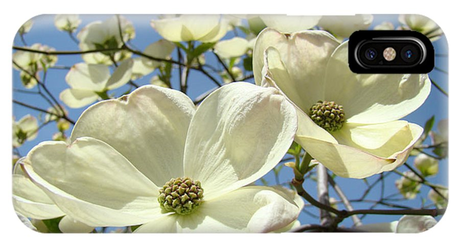 Blue IPhone X Case featuring the photograph Blue Sky Spring White Dogwood Flowers Art Prints by Patti Baslee