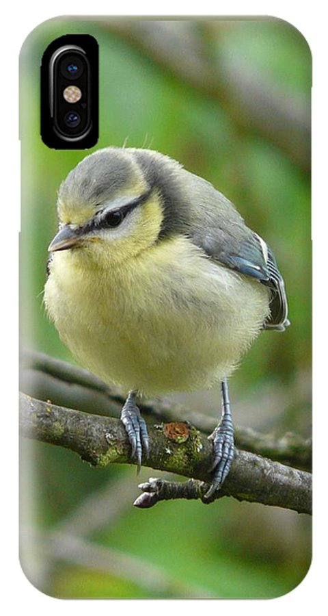 Bird IPhone X Case featuring the photograph Blue Tit In A Cherry Tree by Valerie Ornstein