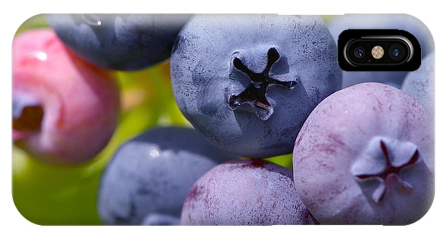 Blueberry IPhone X Case featuring the photograph Blueberries by Sharon Talson