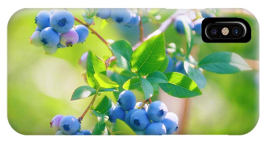 Vaccinium Corymbosum IPhone X Case featuring the photograph Blueberries (vaccinium Corymbosum) by Maria Mosolova/science Photo Library