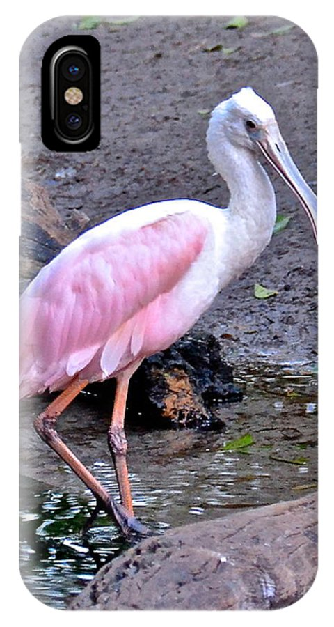 Spoonbill IPhone X Case featuring the photograph Blush by Carol Bradley