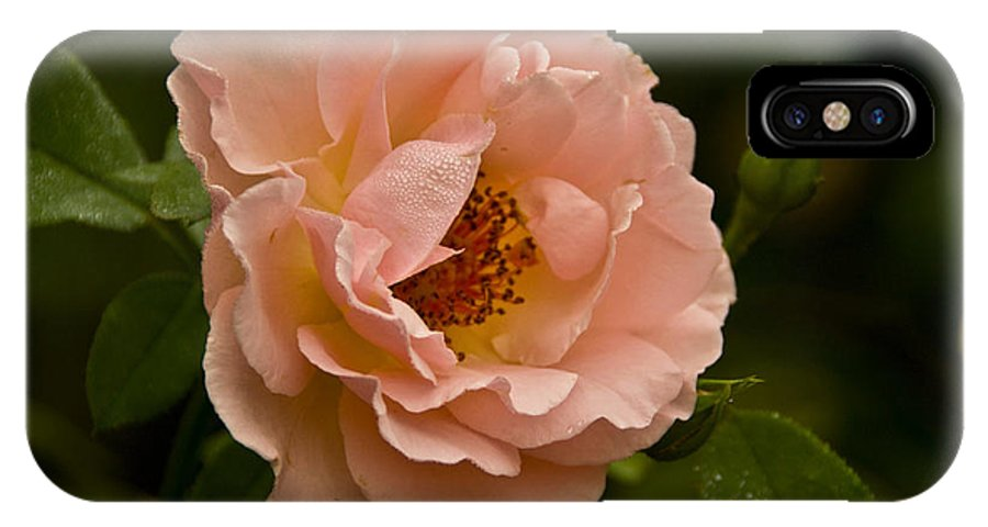 Rose Photographs IPhone X Case featuring the photograph Blush Pink Rose With Dew by Vernis Maxwell
