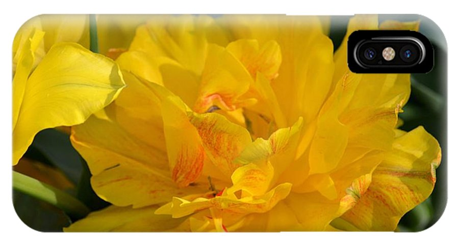 Blushing Yellow IPhone X Case featuring the photograph Blushing Yellow by Maria Urso