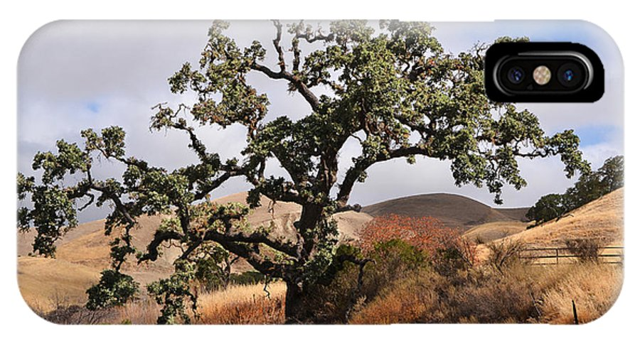 Del Valle IPhone X Case featuring the photograph Bobcats Tree by Karen W Meyer