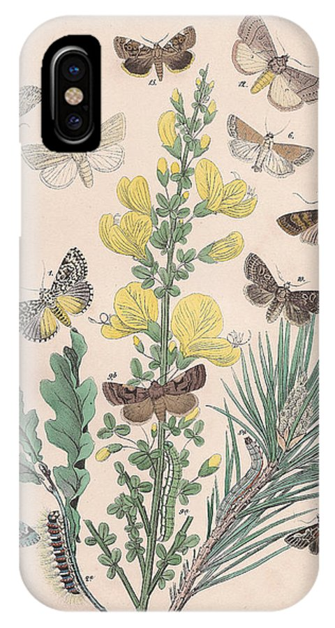 Butterfly IPhone X Case featuring the drawing Bombycoidae - Acronyctidae - Orthosidae by W Kirby