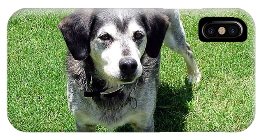 Dog IPhone X Case featuring the photograph Bongo by Rachel Kilpatrick