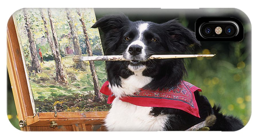Border Collie IPhone X / XS Case featuring the photograph Border Collie At Painting Easel by John Daniels