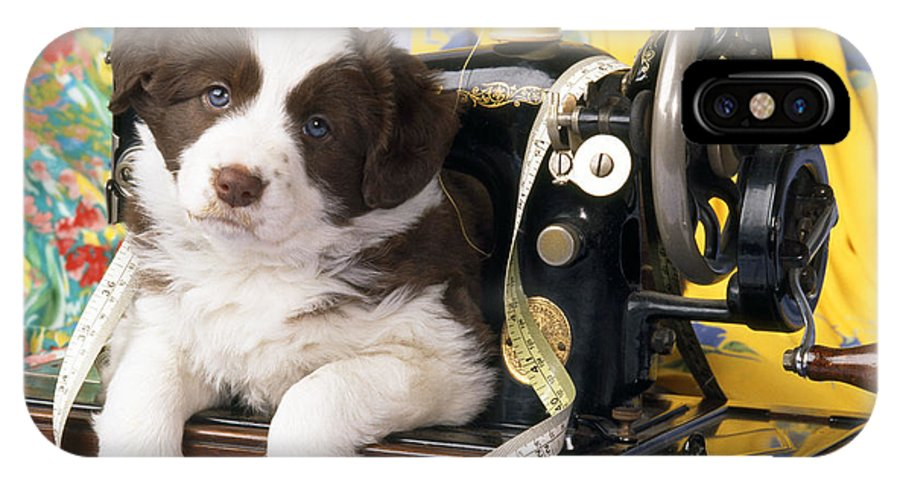 Border Collie IPhone X / XS Case featuring the photograph Border Collie Puppy With Sewing Machine by John Daniels