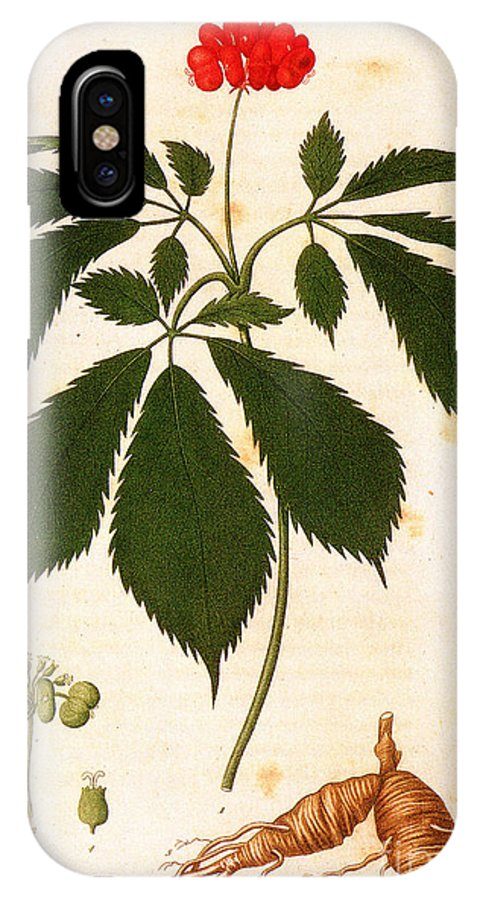 1810s IPhone X Case featuring the photograph Botany: Ginseng by Granger