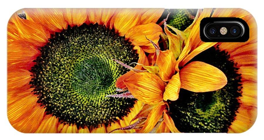 Artiste Danielle Parent IPhone X Case featuring the photograph Bouquet Of Sunflowers by Danielle Parent