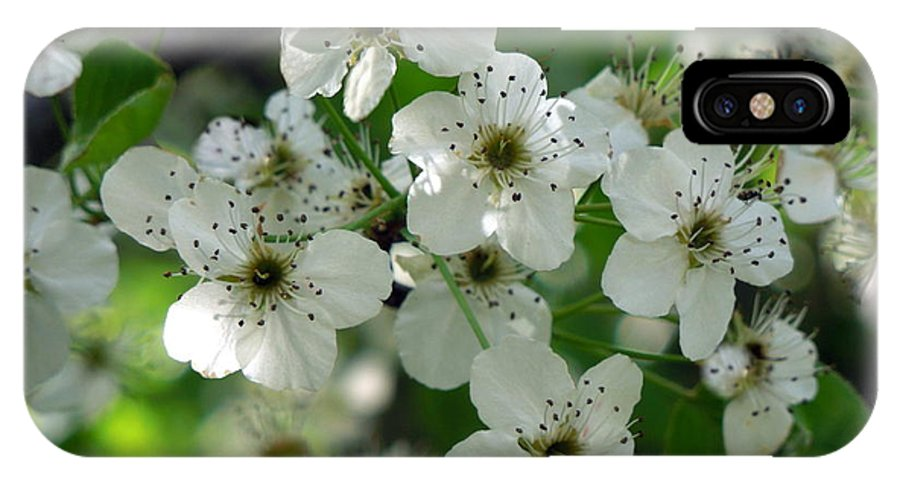 IPhone X Case featuring the photograph Bradford Pear Blooms by Renee Trenholm