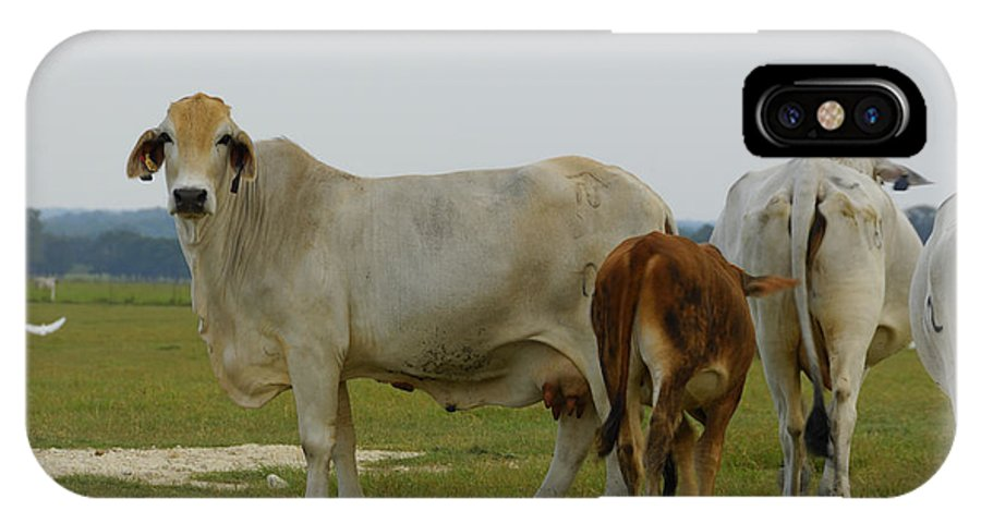 Cow IPhone X Case featuring the photograph Brahman Cattle by Charles Beeler