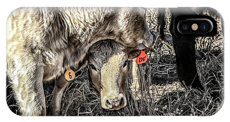 Brahman IPhone X Case featuring the photograph Brahman Shy Baby by Toma Caul