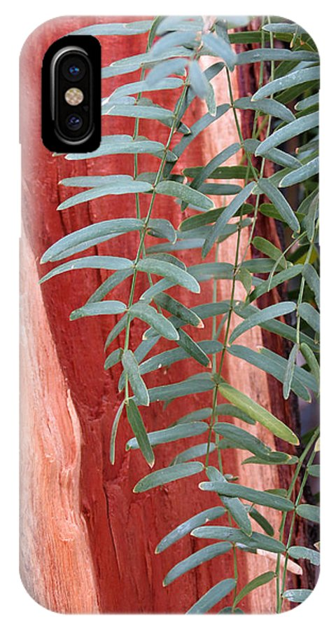 Tree IPhone X Case featuring the photograph Branches And Bark by Laurel Powell