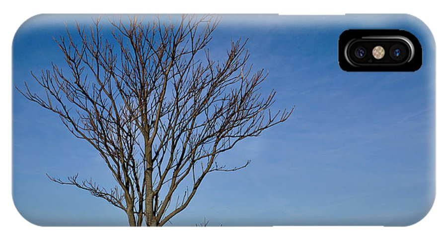 Tree IPhone X Case featuring the photograph Branches by Eryn Carter