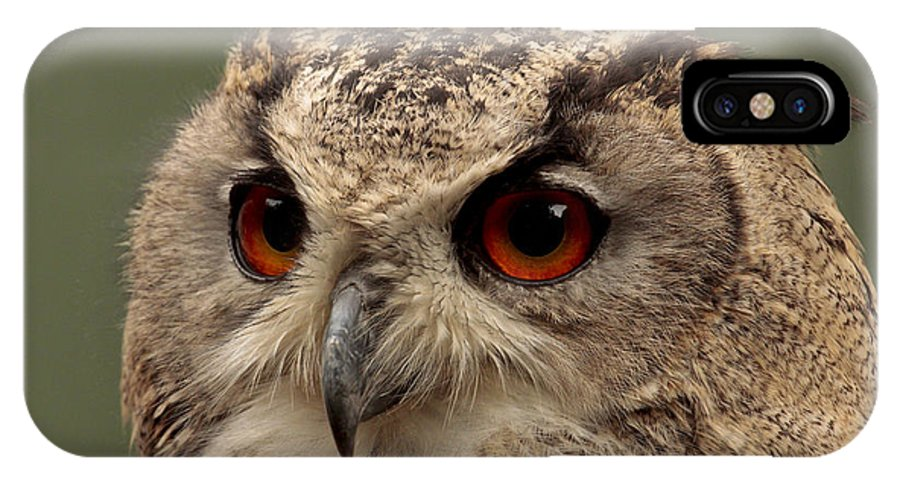 Eagle IPhone X Case featuring the photograph Bright Eyed Eagle Owl by Simon Gregory