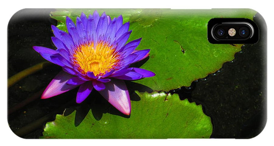Elaine Haakenson IPhone X Case featuring the photograph Bright Purple Water Lilly by Elaine Haakenson