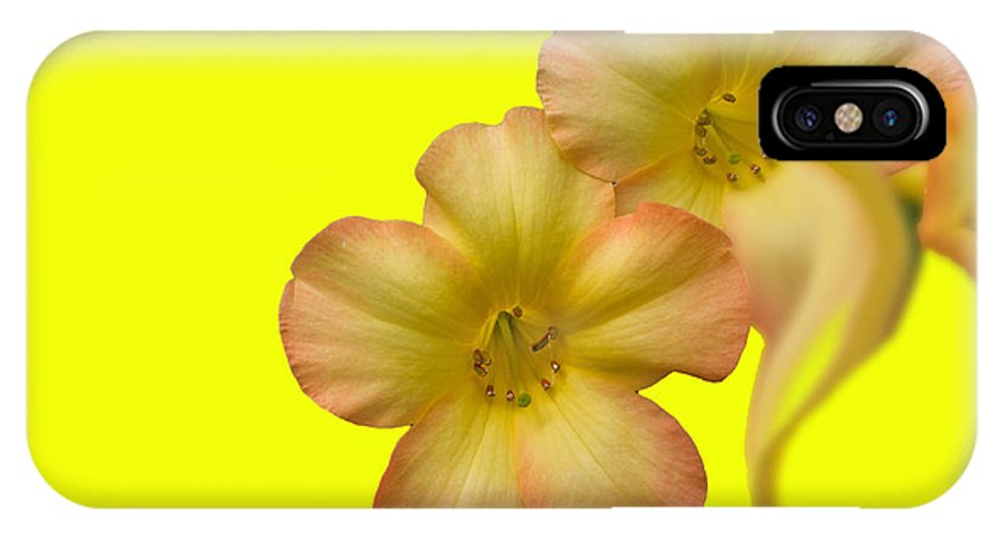 Bright Yellow IPhone X Case featuring the photograph Bright Yellow by Paul Pecora