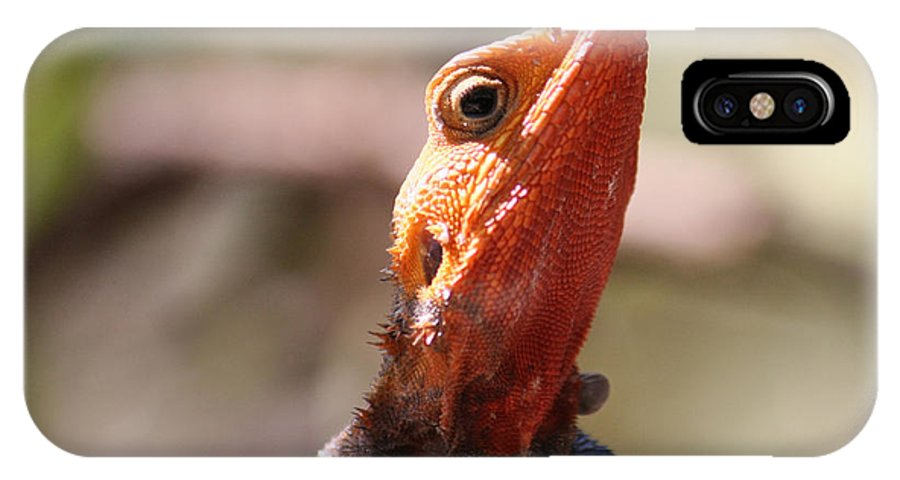Lizard IPhone X Case featuring the photograph Brightly-colored Lizard Eyeing The Camera by Bob Parr