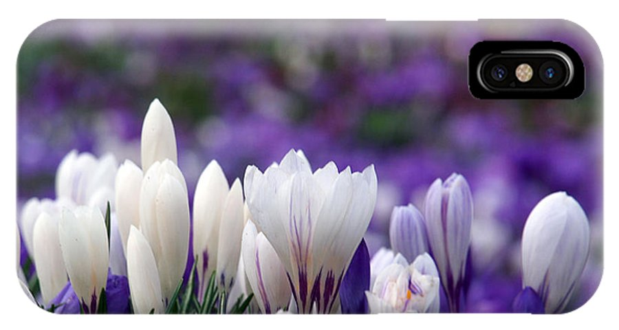 Crocuses IPhone X Case featuring the photograph Brilliant White by Susan Tinsley
