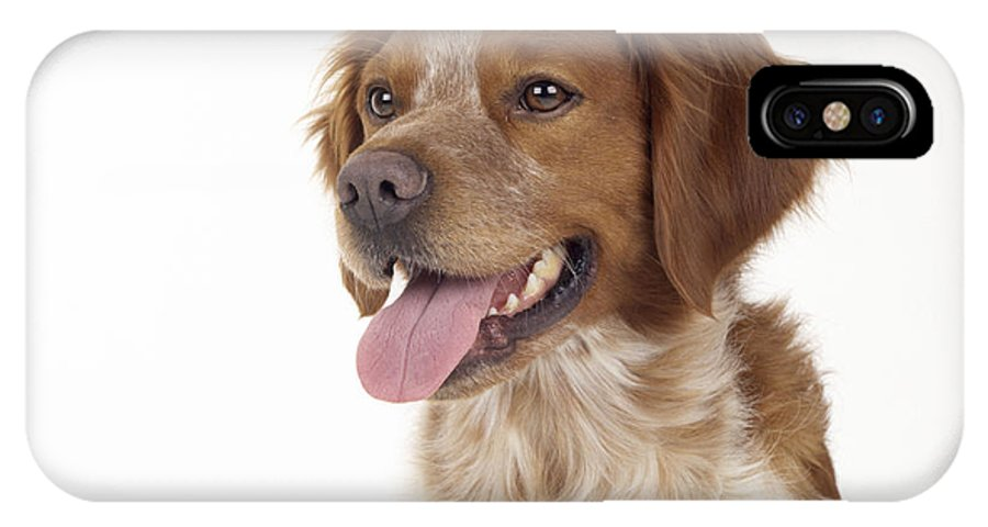 Brittany IPhone X / XS Case featuring the photograph Brittany Dog, Close-up Of Head by John Daniels