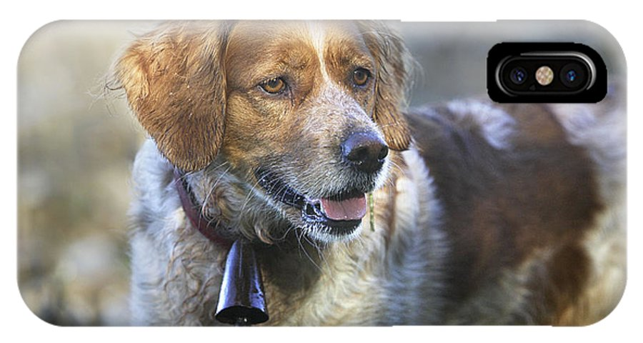 Brittany Spaniel IPhone X / XS Case featuring the photograph Brittany Spaniel by M. Watson