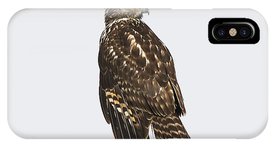 Wildlife IPhone X Case featuring the photograph Broad Tailed Hawk by Kenneth Albin
