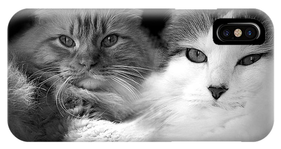 Cat IPhone X Case featuring the photograph Brothers For Life by Rhonda Burger