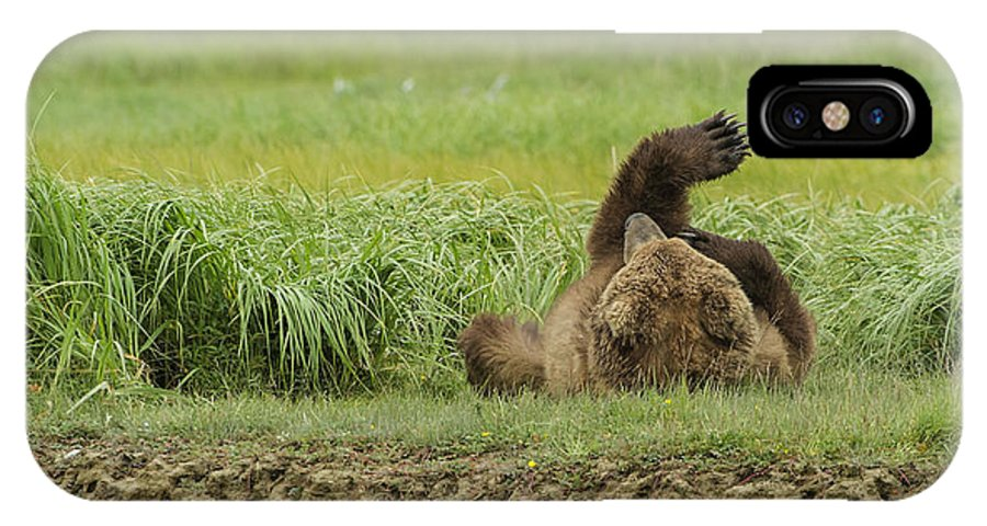 Michael Cummings IPhone X Case featuring the photograph Brown Bear Picture 37 by Bear Images