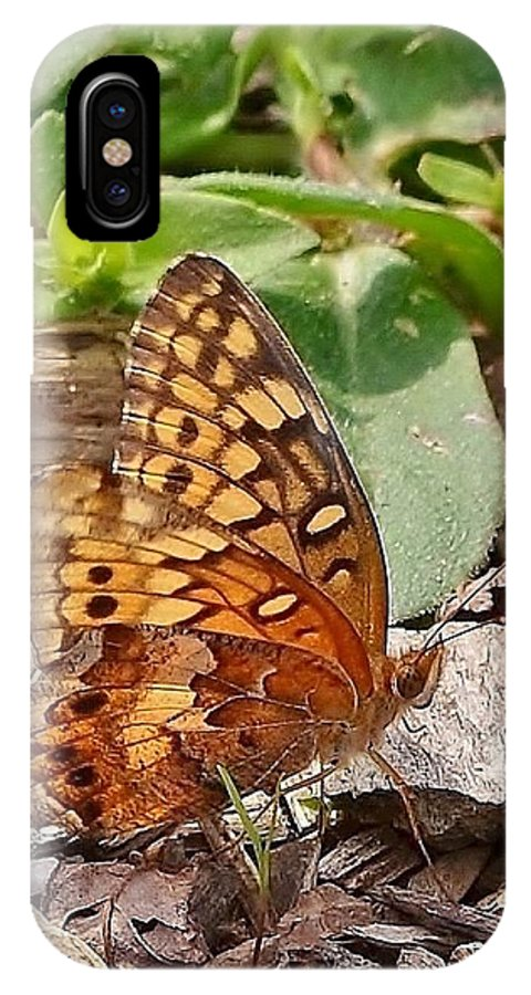 Butterfly IPhone X Case featuring the photograph Brown Butterfly by Kim Bemis
