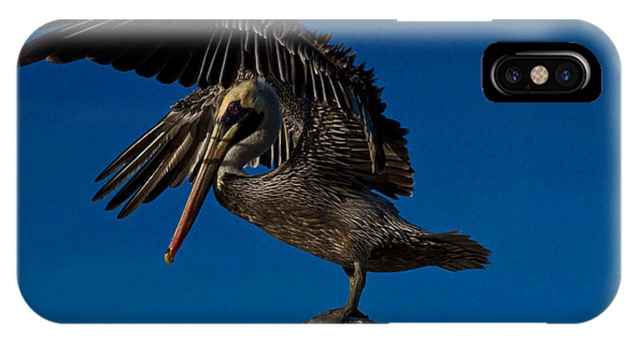 Brown Pelican IPhone X Case featuring the photograph Brown King Pelican by Kristine Patti