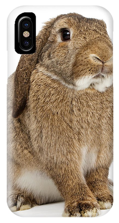 Rabbit IPhone X Case featuring the photograph Brown Lop-earred Rabbit Isolated On White by Susan Schmitz