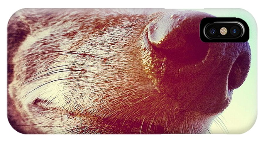 Nose IPhone X Case featuring the photograph Brown Noser by Angela Rath