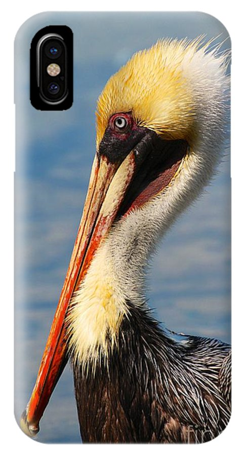 Brown Pelican In Morning Sun IPhone X Case featuring the photograph Brown Pelican In Morning Sun by Keith Lundquist