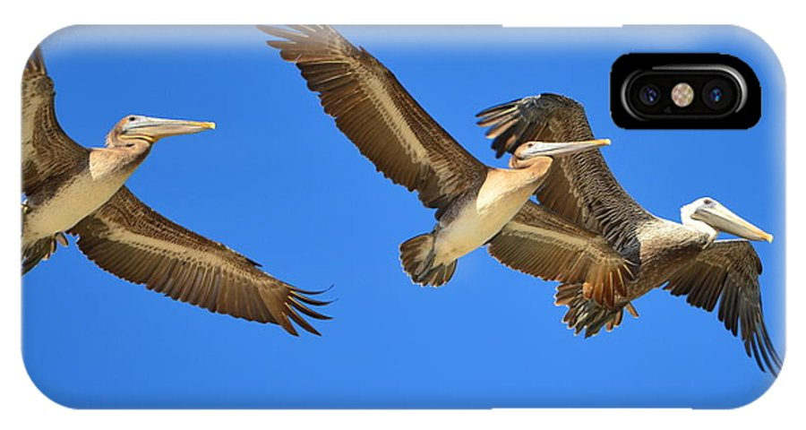 Brown Pelicans IPhone X Case featuring the photograph Brown Pelicans In Flight by Debra Martz