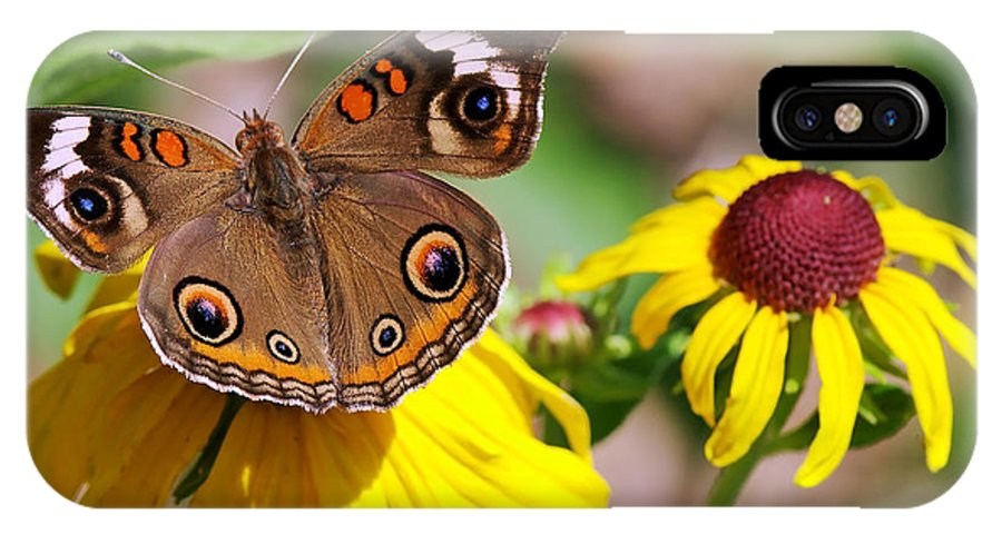 Nature IPhone X Case featuring the photograph Buckeye Butterfly On Sunflower by Charles Feagans