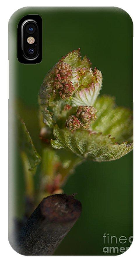 Bud-break IPhone X / XS Case featuring the photograph Bud-break 2 by Debbie Ames