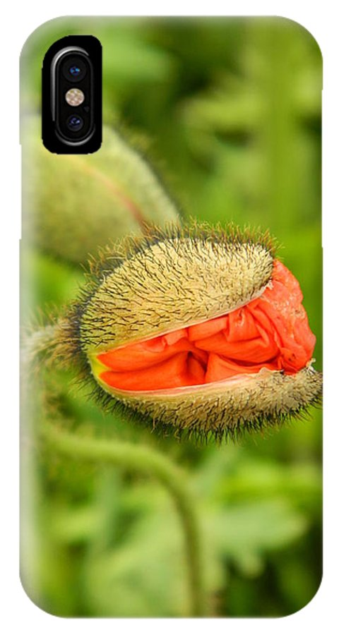 Bud IPhone X Case featuring the photograph Budding Poppy by Nicki Bennett