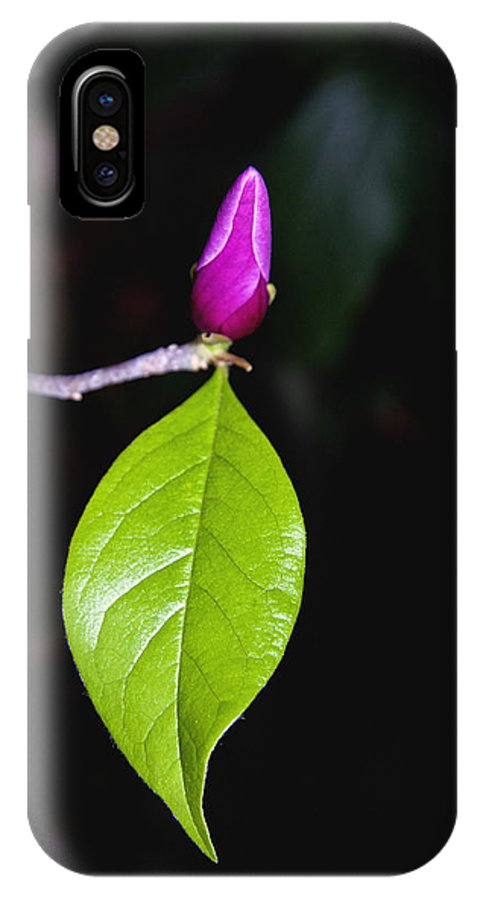 Tulip Tree IPhone X Case featuring the photograph Budding Tulip Tree Bloom by Her Arts Desire