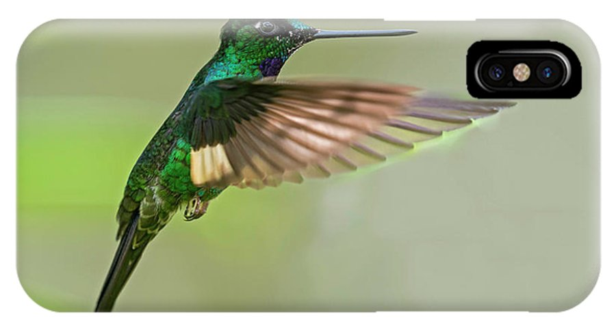 Wildlife IPhone X Case featuring the photograph Buff-winged Starfrontlet by Juan Jose Arango