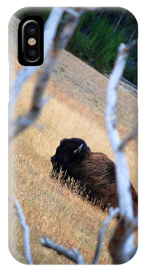 Buffalo IPhone X Case featuring the photograph Buffalo by Breanna Calkins