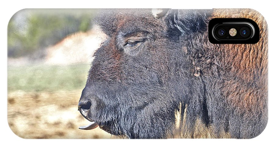 Animals IPhone X Case featuring the photograph Buffalo Tongue by SC Heffner