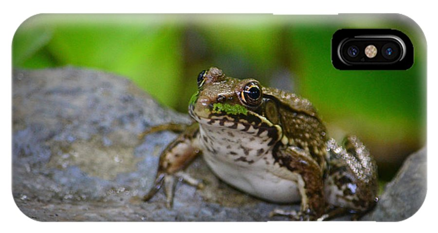 Bull Frog IPhone X Case featuring the photograph Bull Frog by Jennifer Krantz