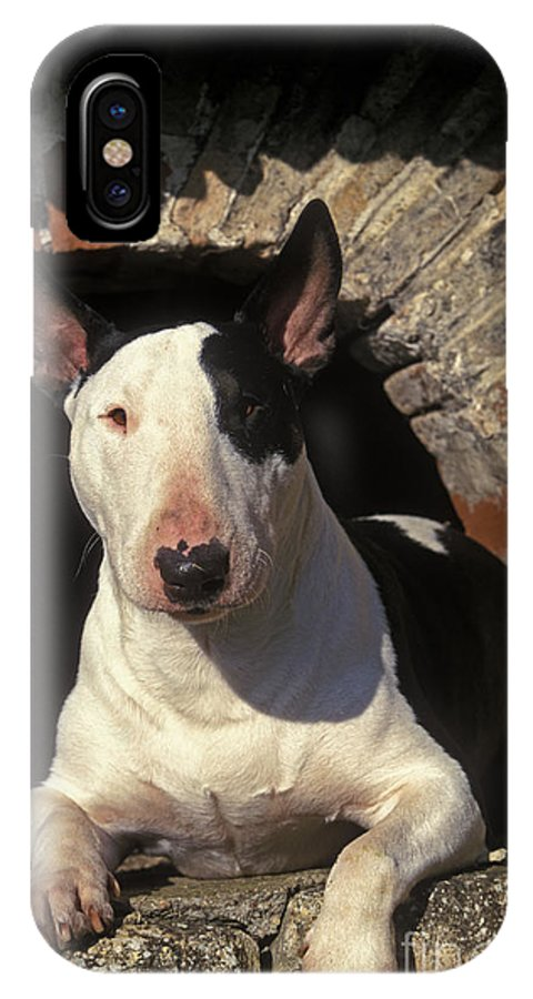 Bull Terrier IPhone X / XS Case featuring the photograph Bull Terrier Dog by Jean-Michel Labat