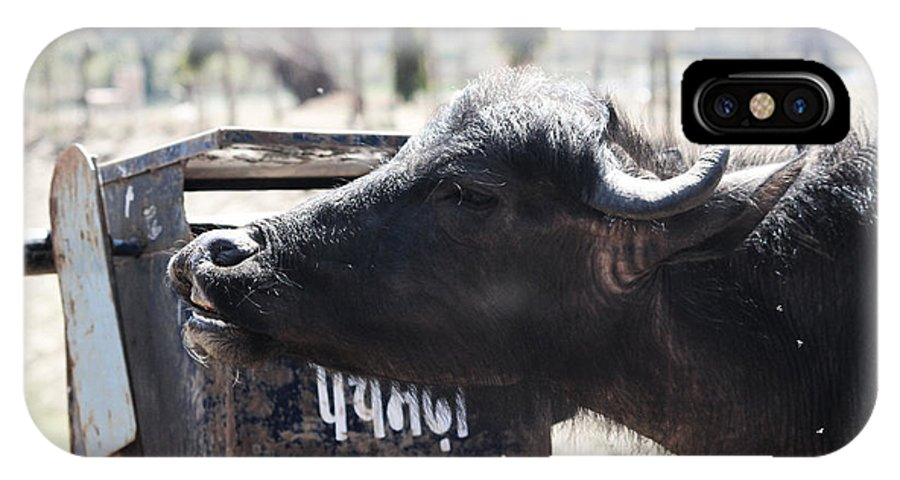 Flowers IPhone X Case featuring the photograph Bulls Cry by Four Hands Art