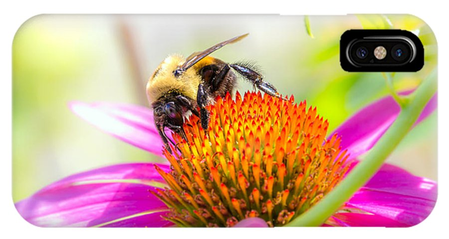Bees IPhone X / XS Case featuring the photograph Bumble Bee by Bob Orsillo