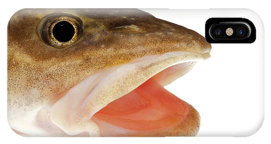 Burbot IPhone X Case featuring the photograph Burbot Lota Lota Head Isolated On White by Stephan Pietzko