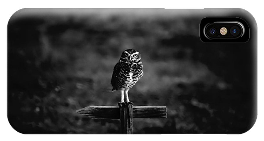 burrowing Owl IPhone X Case featuring the photograph Burrowing Owl At Dusk by Kelly Gibson