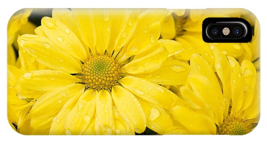 Flower IPhone X Case featuring the photograph Burst Of Yellow by Katherine Hawkins
